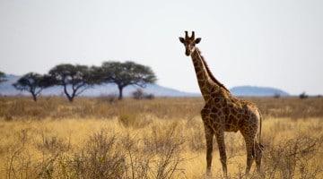 safari-afrique-namibie